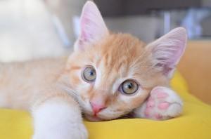 Cat_rank01