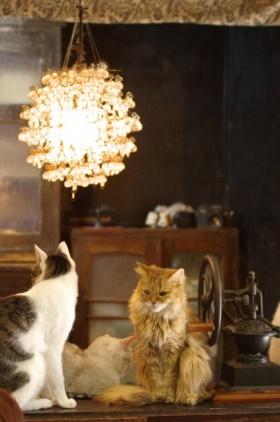 CatCafe01