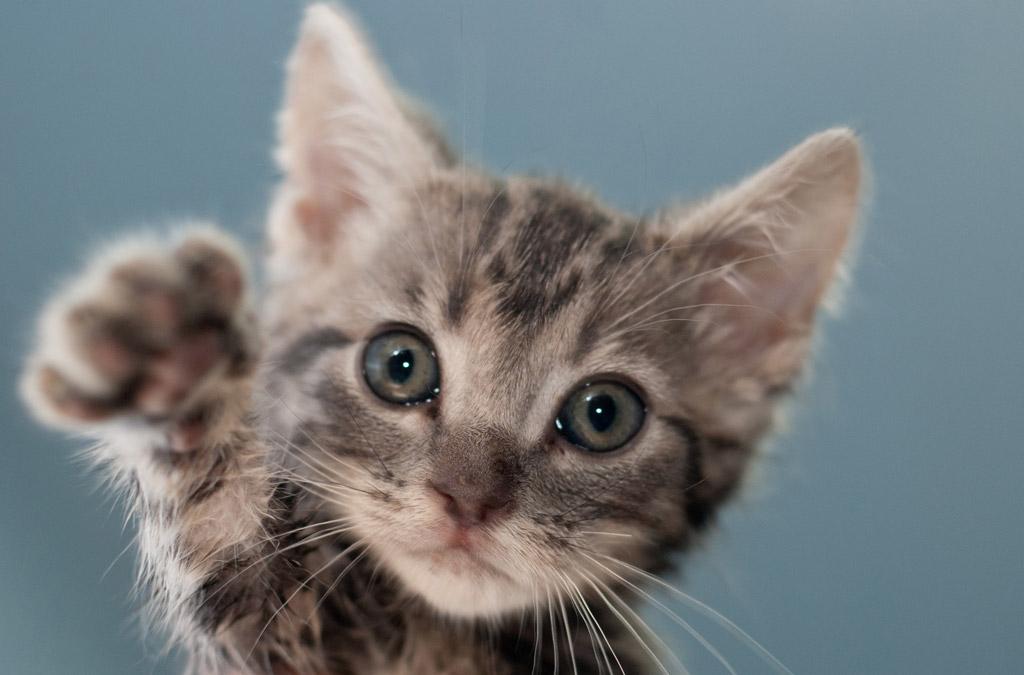 cat-baby01