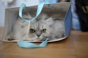 cat-gomi01