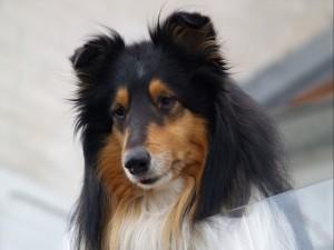 dog-heinetu01