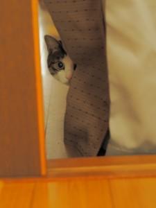 cat_sutoresu02