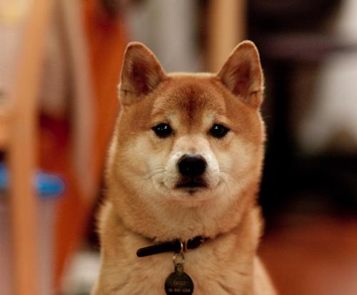dog_hifu01