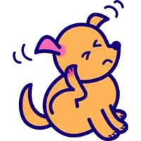 dog_kayumi00