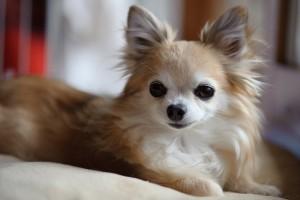 dog_kusshing02