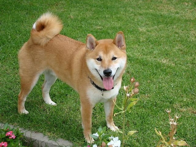 dog_kussing01