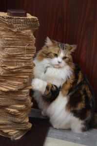 cat262-01