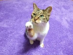 cat262-02