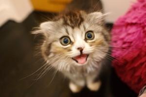 cat263-01