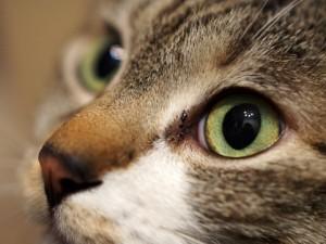 cat264-01