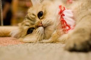 cat265-01