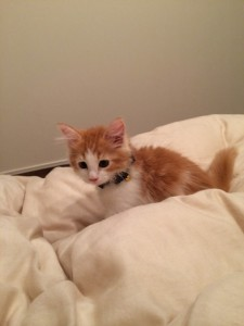 cat343-01
