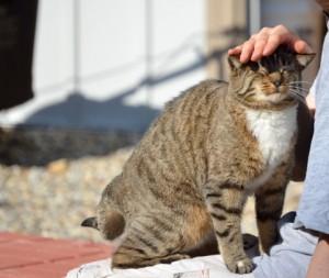 cat343-02