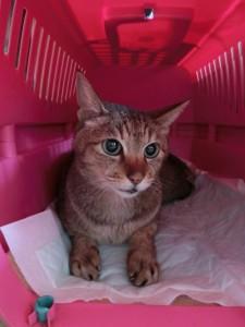 cat344-01