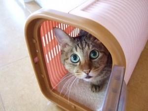 cat366-01
