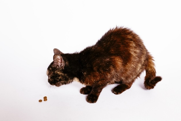 cat367-01