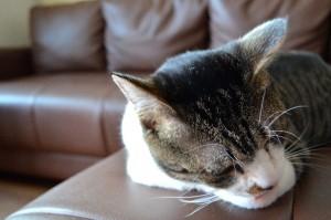 cat368-01
