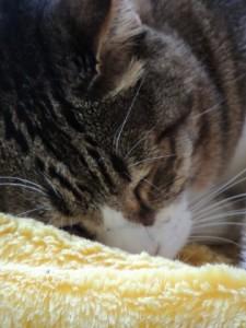 cat374-01